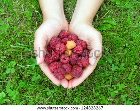 Woman's hands with a raspberry on a background of green grass - stock photo