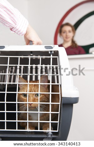 Woman Taking Cat To Vet In Carrier - stock photo