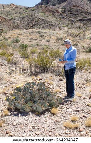 Woman taking pictures on the tablet blooming cactus. Big Bend National Park, Texas - stock photo