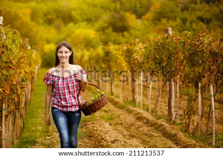 Woman walking  in vine rows in vineyard - stock photo