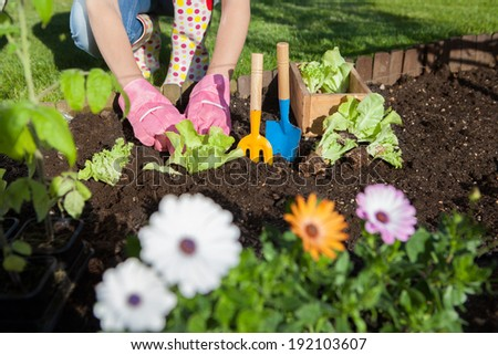 Woman wearing gloves planting lettuce and tomatoes, gardening concept - stock photo
