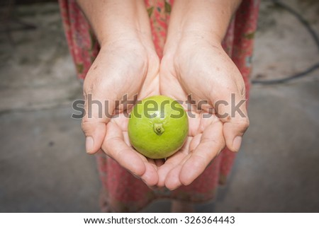 Woman with a handful of sour limes - stock photo