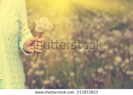 Woman with bunch of dandelion flowers in hand - stock photo