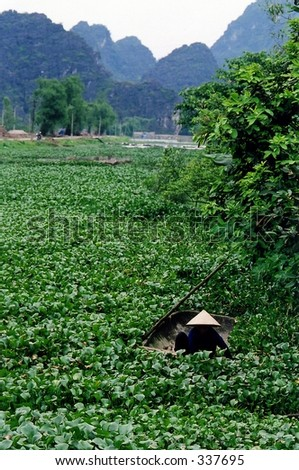 Woman working in lily fields - stock photo