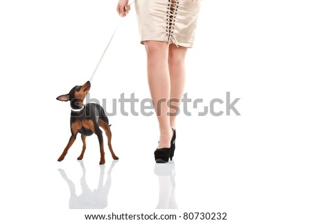 women and dog walking, woman's legs with high heels and miniature  pincher , isolated - stock photo