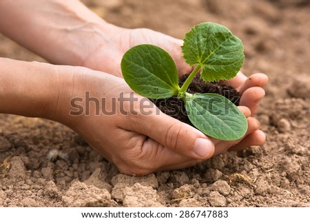 women hands holding seedling with soil - stock photo