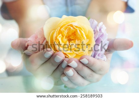 Women hands with roses - stock photo