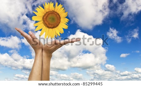 Women's hands with a sunflower on background of blue clear sky. Symbol of nature and concern. - stock photo