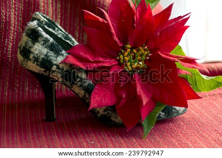 Women shoes; Lady black and white plaid shoes with red flower; Christmas decor black and white lady shoes, red Poinsettia flower - stock photo