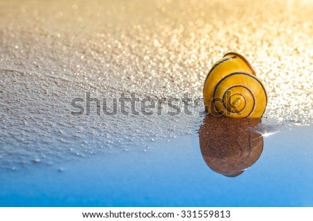 Wonderful belted snail shell on a beach with blue water and golden light/Shell with blue/beach treasure - stock photo