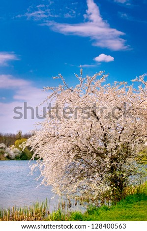 Wonderful  blossoming tree and splendid lake early morning by spring. - stock photo