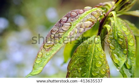 Wonderful colorful leaf with rain drops. wall decoration - stock photo