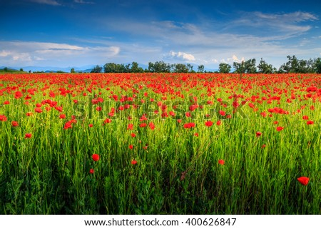 Wonderful field of red poppy blooming in early summer day - stock photo