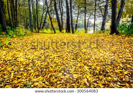 Wonderful golden grove near the lake. - stock photo