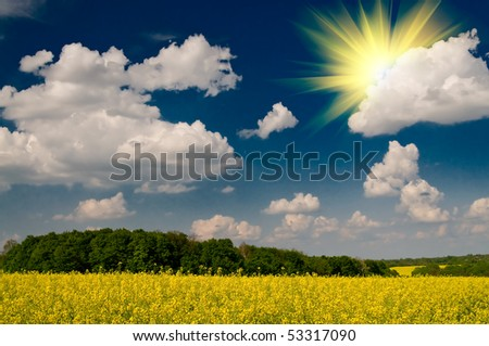 Wonderful golden rapeseed field and white clouds. - stock photo