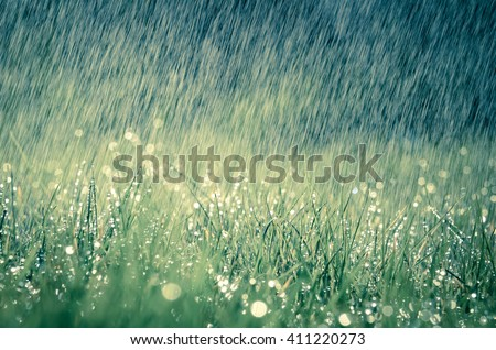 Wonderful heavy rain shower in the sunshine of springtime or summer enjoy the relaxing nature - stock photo