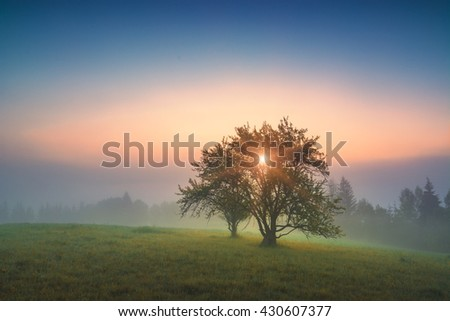 Wonderful misty valley in a golden morning light with trees on a green hill. Carpathians, Ukraine, Europe. - stock photo