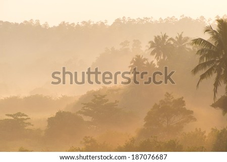 Wonderful sunrise above tropical palm jungle with sun rays and thick morning fog - stock photo