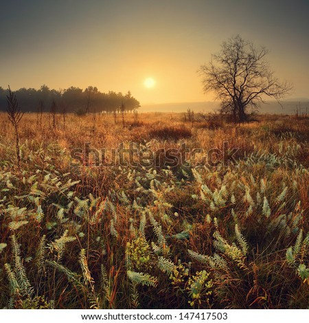 Wonderful sunrise with a lonely tree in the Ukrainian prairie valley. - stock photo