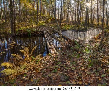 Wood autumn small river. A landscape - stock photo