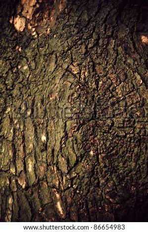 wood bark texture - stock photo