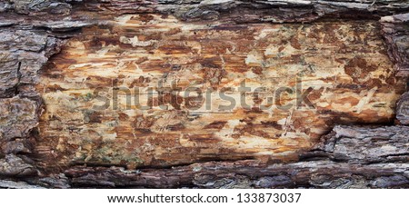 wood cross section, backgrounds bark and wood texture - stock photo