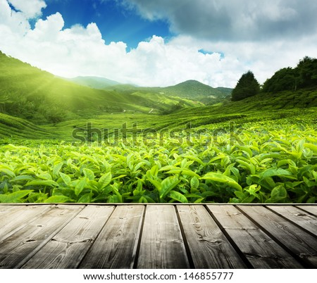 wood floor on tea plantation Cameron highlands, Malaysia  - stock photo