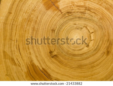 Wood grain texture detailing the tight rings of a 700 year old cypress tree - stock photo