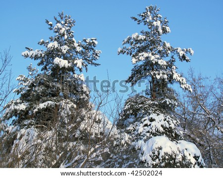 Wood in Russia - stock photo