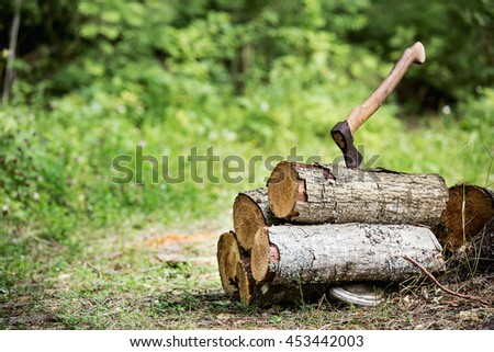wood in the forest - stock photo