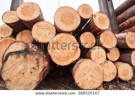 wood logs industry timber natural - stock photo