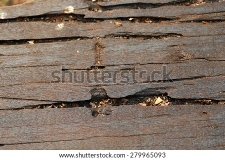 wood, old wood , old wood background. - stock photo