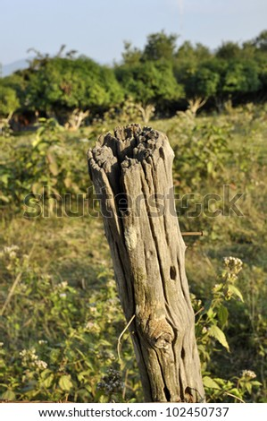 Wood Outdoor Nature Timber Old Decay - stock photo