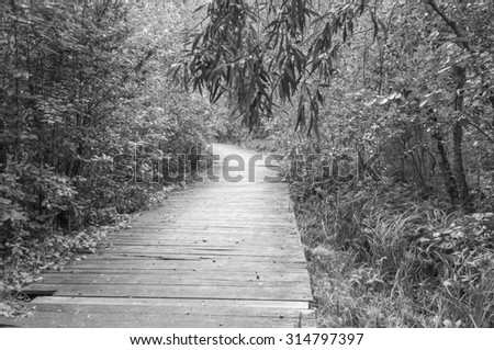 Wood path way among the forest - stock photo