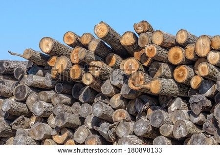 Wood Pile of Logs from Tree Trunks Against Blue Sky - stock photo