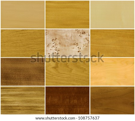Wood set, veneer of trees, left to right and top to down: beech, elm, maple, oak, root of a poplar, anegri, nutwood, ash, ice birch, zebrano, makore, teak - stock photo