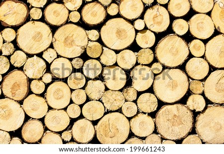 Wood stacked after lumbering  - stock photo