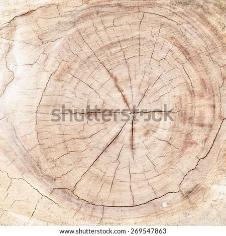 Wood texture background / Wood texture  - stock photo