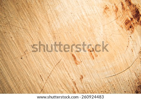 Wood texture of cutted tree trunk - stock photo
