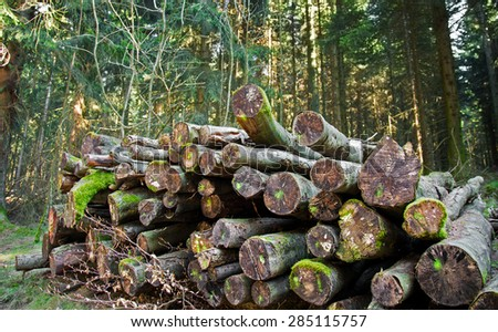Wood Trunk in Forest - stock photo