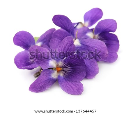 Wood violets flowers close up - stock photo