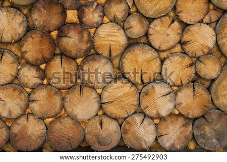 Wood / Wood from cut trees in a forest / Wall of wood - stock photo