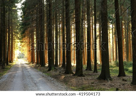 Wooded forest tree road surrounding road backlit by golden sunlight before sunset with sun rays pouring through trees on forest floor illuminating trees branches - stock photo