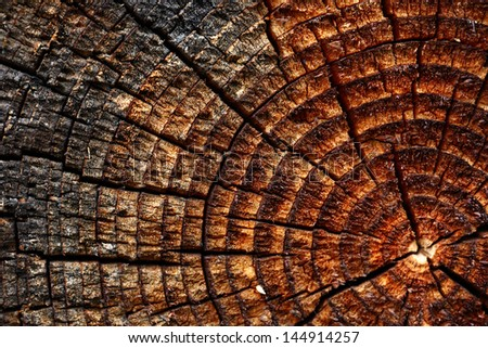 Wooden background with cracked annual growth ring - stock photo