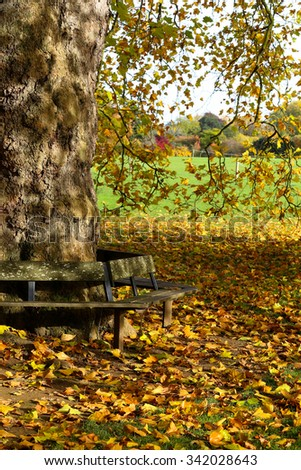 Wooden bench around a big tree on sunny day in Oxford University Parks, fall landscape with colorful foliage, beautiful background - stock photo