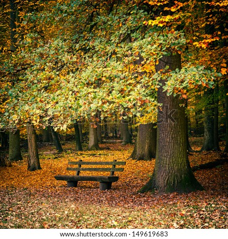 Wooden bench in the autumn forest - stock photo