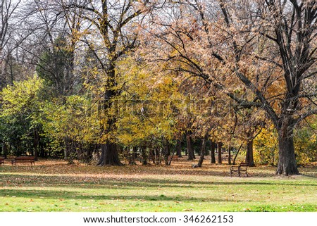 Wooden benches from the city park in the autumn colorful fallen leaves with sunny autumn day. City park in autumn. Selective focus. As background to the point of stage design - stock photo
