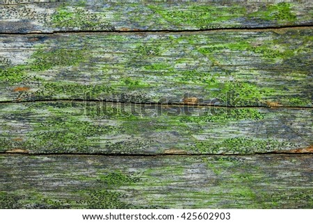 Wooden board filled with moss . - stock photo