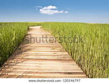 Wooden boardwalk creates path through field of tall green grass leading to blue sky and puffy white cloud - horizontal - stock photo