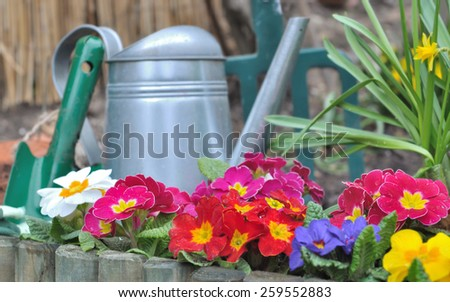 wooden border with colorful pansies  and gardening tools - stock photo